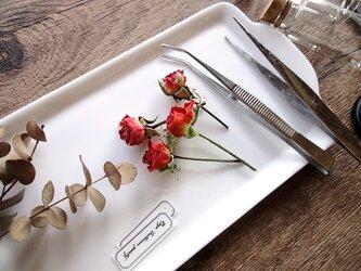 【展示のみ】植物標本 Botanical Collection■No.R-9 バラ オータムパーティーの画像