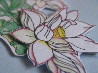 【展示品】ほんのきもちカード 【夏白色 蓮のはな】の画像