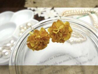 petal cの画像