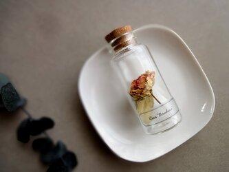 植物標本 Botanical Collection■No.R-10 バラ バンビーナの画像