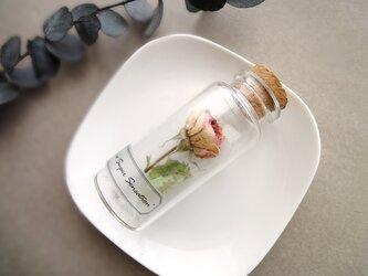 ☆植物標本 Botanical Collection■No.R-13 バラ スーパーセンセーションの画像