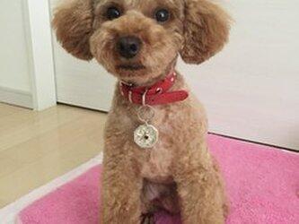 【受注製作】オリジナル犬・猫ちゃん用迷子札の画像