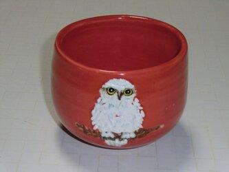 抹茶碗・白フクロウの画像