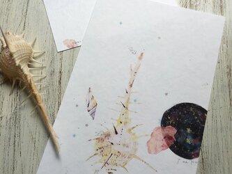 海がくれたもの 〜ホネ貝とナミマガシワの画像