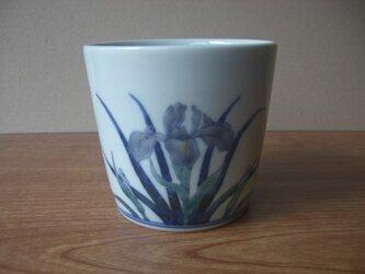 菖蒲文フリーカップの画像