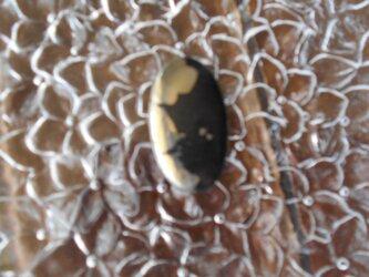 アパッチゴールド カボション 「勇壮」非加熱 75.45cts ナチュラル  アフリカ産の画像