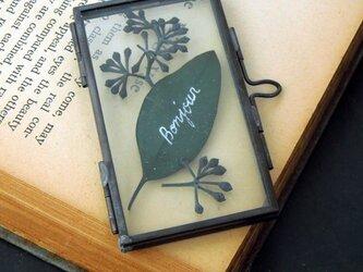植物標本ペンダント//アンティークアイアンフレーム(ボタニカル//ユーカリ黒)の画像