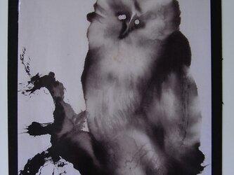 真夜中の梟の画像