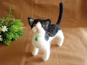 羊毛猫*白黒*4本立ちの画像