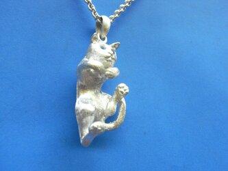 ハイアガリ猫の画像