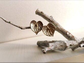 Tropical flower 〜silver〜の画像