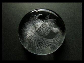 ペーパーウェイト--金魚*Lの画像