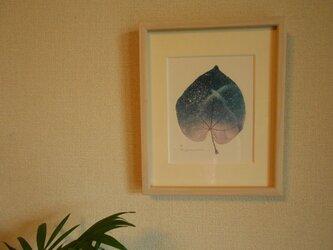 ちいさな葉の画像