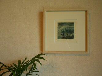 風と夏の木立の画像
