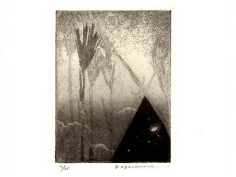 cosmic meadowの画像