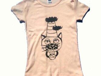 猫の とんがり帽子の画像