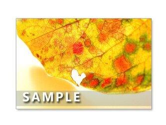 1176) 色鮮やかな秋! ポストカード5枚組の画像