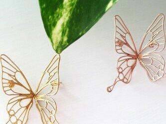 butterfly ピアス  B-L2-P/ Gの画像