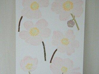 葉書〈秋明菊②-2〉の画像