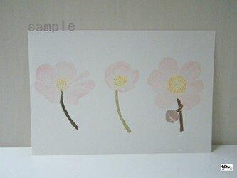 葉書〈秋明菊③-2〉の画像