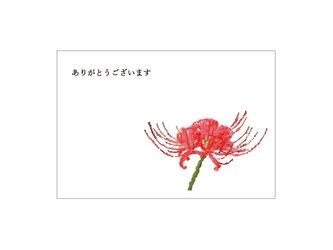 彼岸花の39card②の画像