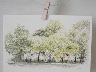 木の下のカフェ  / postcard 2枚組の画像