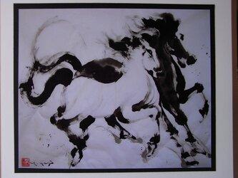 白と黒の馬の画像
