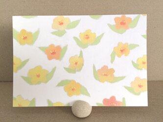 ポストカード ―お花畑の画像