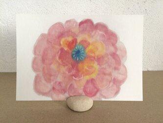 ポストカード ―大輪の花の画像