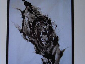 狙う虎の画像
