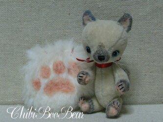 小さなシャム猫の画像