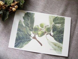 donguri / postcard 2枚組の画像