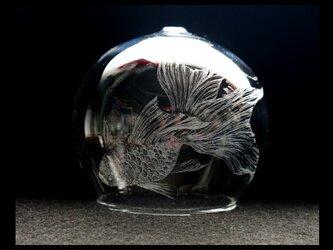 風鈴--金魚の画像