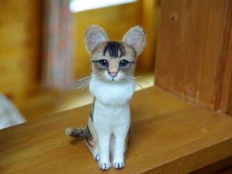 K様 【オーダー キジトラ白猫ちゃん】ご予約品 の画像