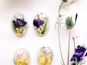 yellowdrop-dryflowerの画像