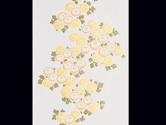 光琳菊の画像