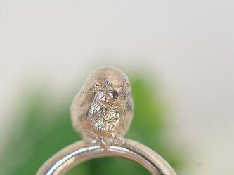 マメルリハの指輪の画像