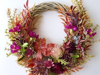 Cosmos wreath VIIの画像