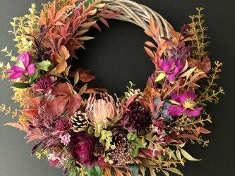Cosmos autumn wreath VIIの画像