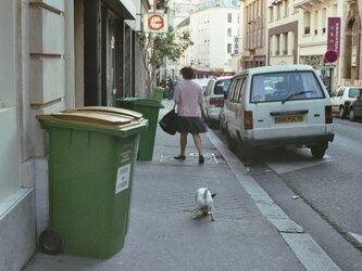 【額付写真】犬も歩けば。の画像