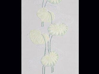 水葵の画像