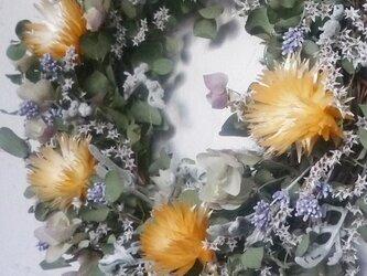 シルバーデイジーの春色リースの画像