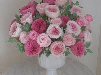 豪華 優雅なピンクローズの画像