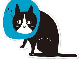 エリザベスハチワレ猫ポストカード【8枚入り 1000円】の画像