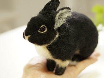 てのひらウサギ 黒の画像