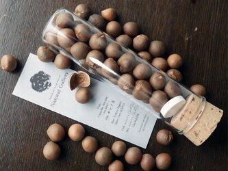 "Seed mania bottle ""tea plant""の画像"