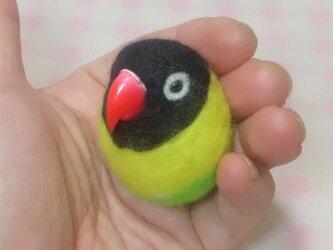 キエリクロボタンインコ  ☆選べる2タイプ☆(Aマグネット・Bクリップ付ブローチピン)  コロコロ♪丸顔  羊毛の小鳥の画像