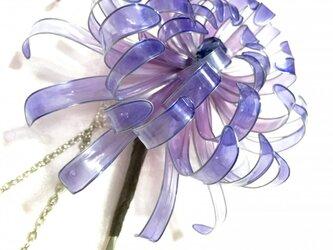 グラデーション菊かんざしの画像