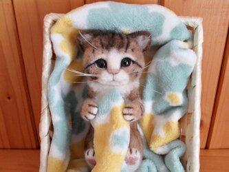 ほんのり癒しの子猫ちゃん の画像