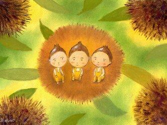 くりの三兄弟の画像